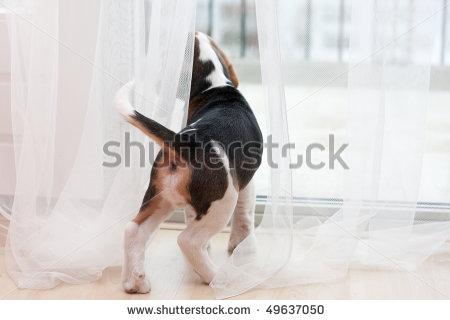 собака на широком подоконнике