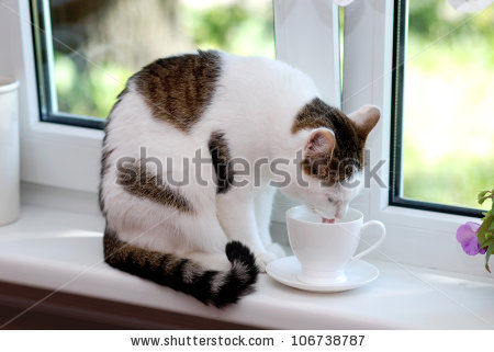 белая чашка на белом окне