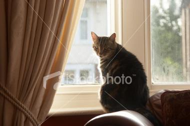 окно в гостинной
